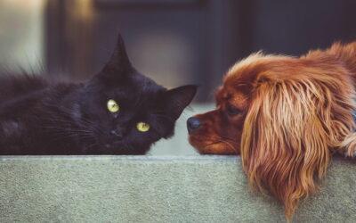 Welche Grünpflanzen sind für Hunde und Katzen giftig?