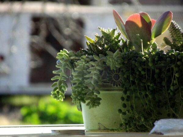 Was sind Grünpflanzen