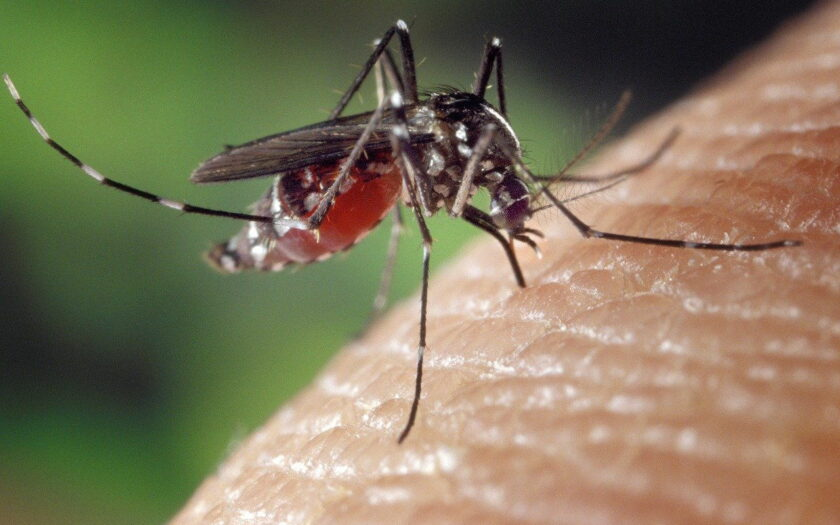 Helfen Grünpflanzen gegen Mücken?