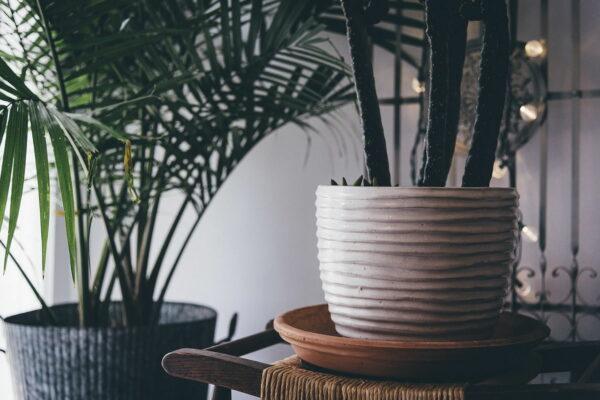 Zimmerpflanzen und Grünpflanzen Bestseller